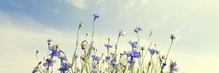 Wild flowers on sunny blue sky, spring meadow