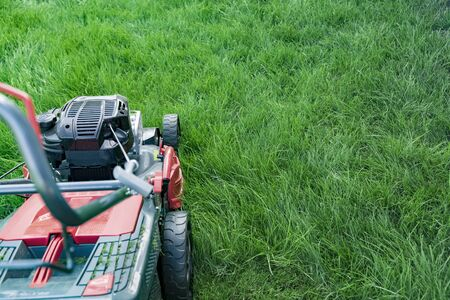 Lawn mower cutting green grass in backyard, mowing lawn copy space Reklamní fotografie