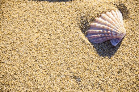 Sea shell on sand photographed from above, hot summer day on the beach, tropical vacation Reklamní fotografie