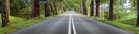 Countryside road with trees on both sides, empty asphalt street panorama