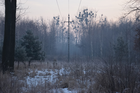 electric pole in the forest