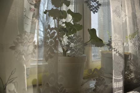 Flower in the old window