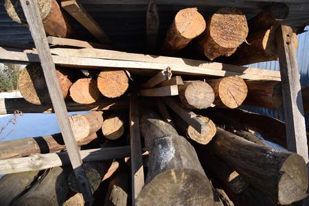 Tree Log Pile