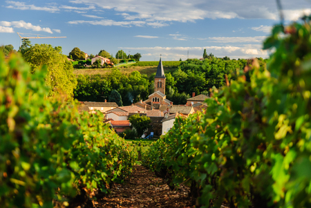 Vineyard and the town of Saint Julien, Beaujolais region, France