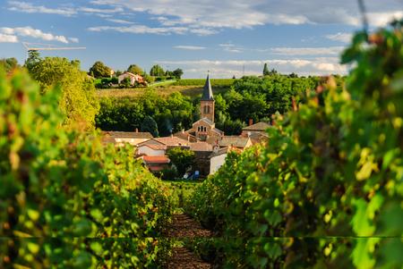 Vineyard and the town of Saint Julien, Beaujolais region, France