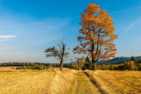 Autumn in Poland - colorful fields and trees in Sto?owe Mountains in Lower Silesia - Lower Silesia Region in Karlow, Poland