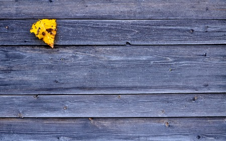 Colorful yellow fallen autumn leaf on wooden gray background 1