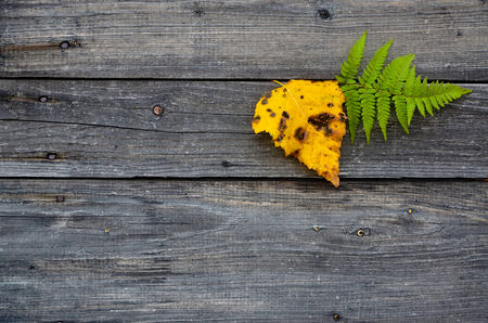 Colorful yellow and green fallen autumn leaves on wooden gray background Stok Fotoğraf