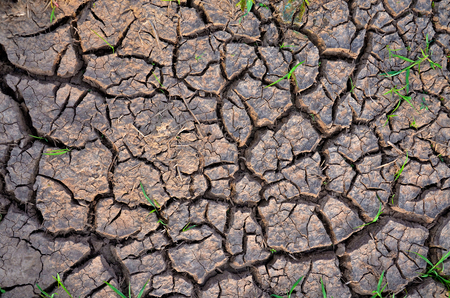Drought land. Barren earth. Dry cracked earth background. Cracked mud pattern.