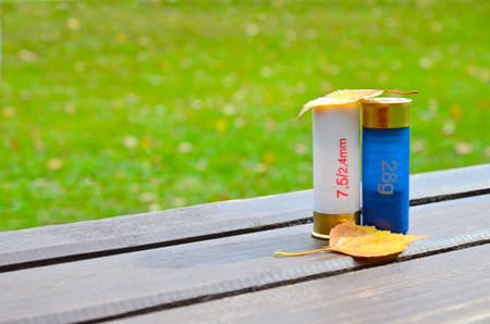 Autumn. Yellow leaves. Two cartridges from a shotgun lie on brown wooden planks against a background of green grass
