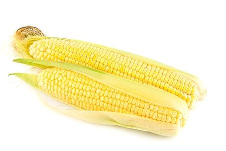 Ripe yellow corn on the cob on a white background photo
