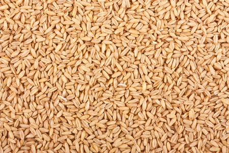 Oat grains texture may be used as background photo