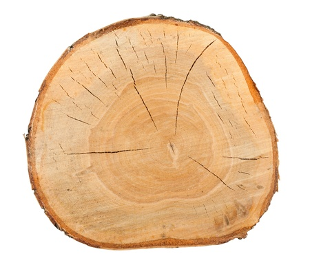 Top view of a birch stump isolated over white background Standard-Bild