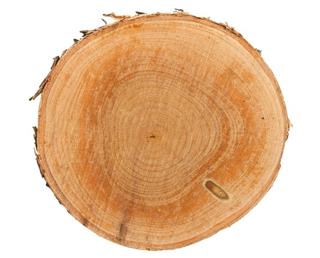 Cross section of tree stump isolated on white background photo