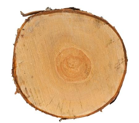 arbre vue dessus: Coupe transversale de tronc d'arbre isolé sur fond blanc