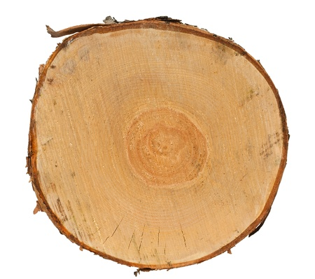 top of the year: Cross section of tree stump isolated on white background Stock Photo