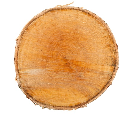Cross section of tree stump isolated on white background Stock Photo - 12889259