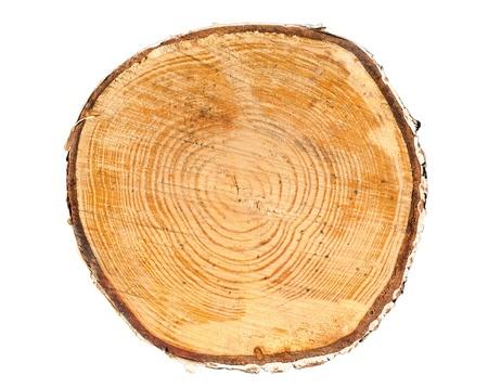 Coupe transversale d'un tronc d'arbre isolé sur fond blanc