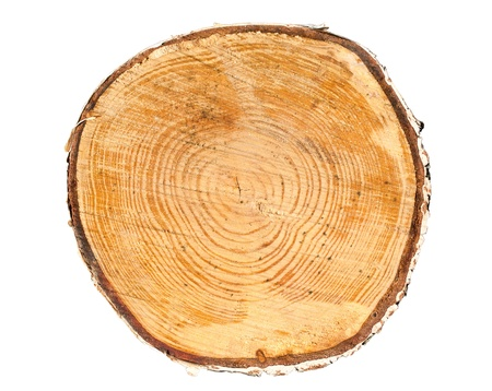 knippen: Doorsnede van boomstam op een witte achtergrond Stockfoto