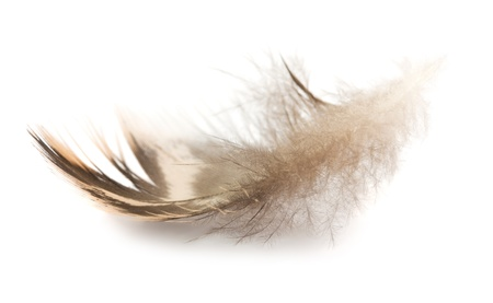 falling feather: Brown small feather isolated on white background Stock Photo