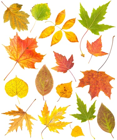 Autumn leaves collection isolated on white background