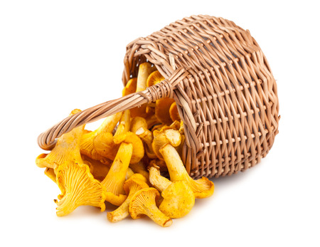 Sprinkled basket with mushrooms isolated on a white background