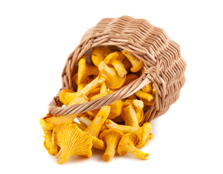 Sprinkled wicker basket with mushrooms isolated on a white background photo