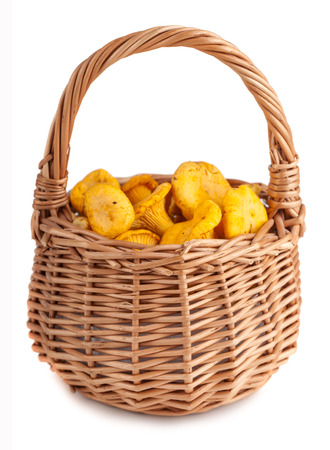 Wicker basket with chanterelle mushrooms on a white  photo