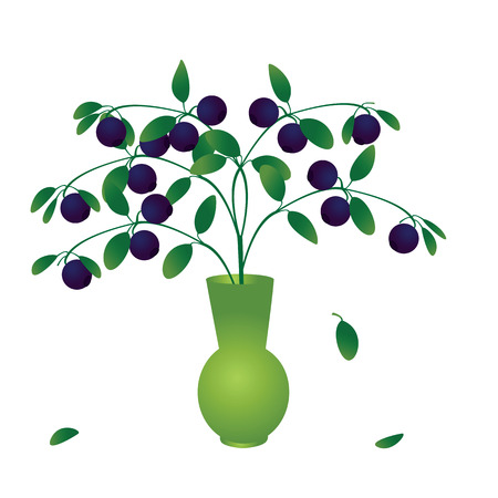 whortleberry: Blueberry branch with ripe berries in vase Illustration