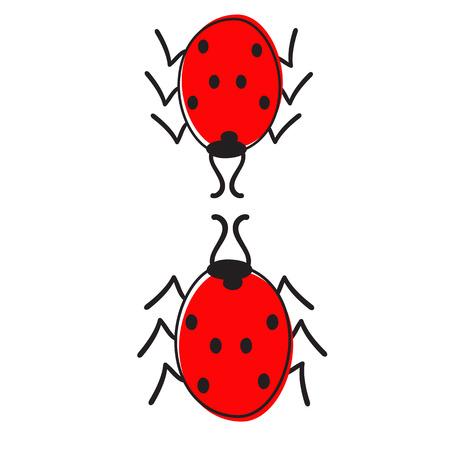 colorific: Two ladybugs isolated on white