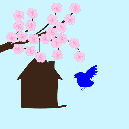 blossoming: Blossoming sakura branches and bird house hanging