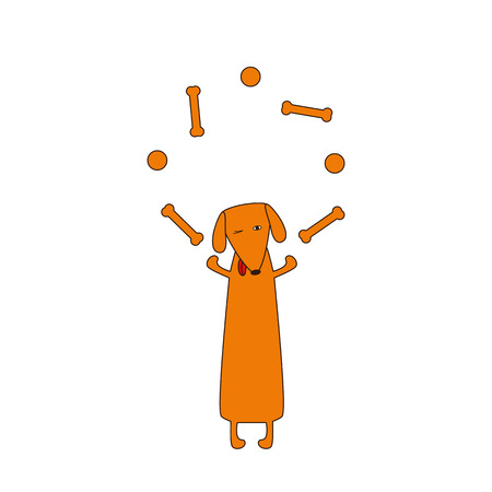 juggle: Cute orange colored brown contoured dachshund with protruding tongue, one eye closed and one opened standing on hind legs and juggling bones and balls forelegs. Vector flat style illustration Illustration
