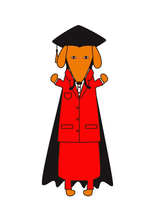 graduation suit: Cute dachshund in red suit, black graduation cap and mantle isolated on white background