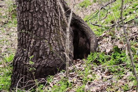 hole in a tree Banco de Imagens