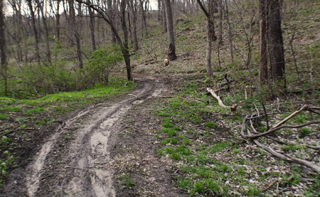 trail leading into the woods