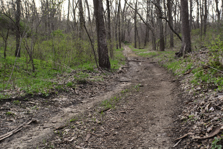 trail leading to the woods