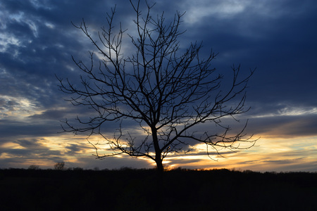 tree in center foreground of sunset