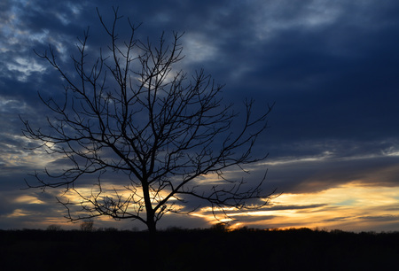 bare tree in foreground of sunset
