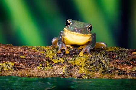 animales del bosque: ¡Sonrisa! una pequeña rana sonriendo a la cámara