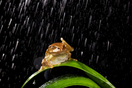 Kleine kikker in de regen