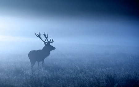 Rood hertenmannetje silhouet in de herfst mist