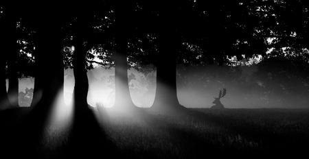 Fallow deer buck in the mist Фото со стока