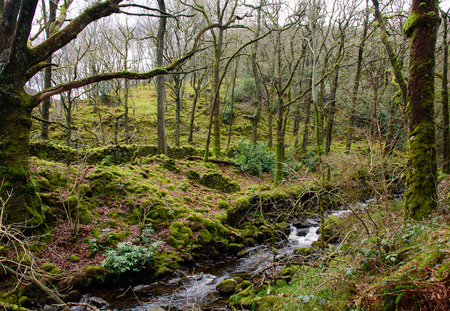 lake district england: Small stream running trough old green moss covered forest. Lake District, England.
