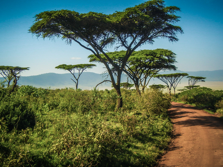 Beautiful landscape with tree in tansania in africa