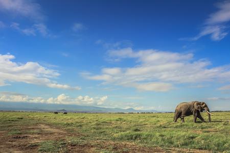 Elefante africano sui masai Mara Kenia Africa