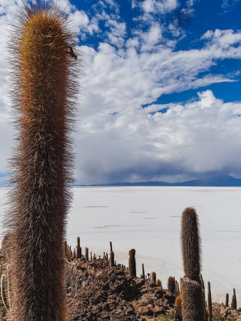 Isla de pescadores salt lake salar de uyuni in bolivia