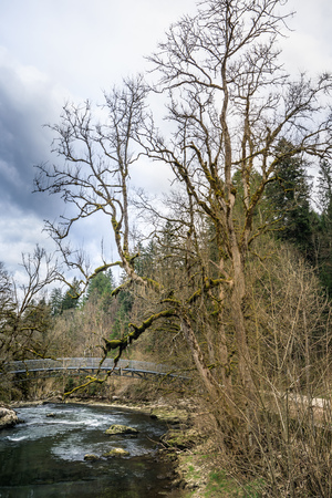 bridge and mossy trees near saut du doubs waterfall switzerland