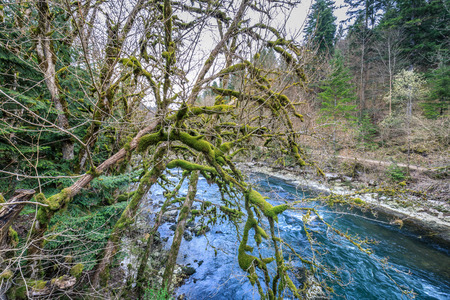 mossy trees on the river doubs near saut du doubs waterfall switzerland