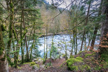 mossy trees on the river doubs near saut du doubs waterfall switzerland