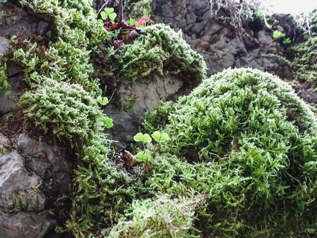 mossy stones near saut du doubs waterfall in the region of doubs switzerland